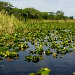 Everglades Airboat Tour - Florida Everglades