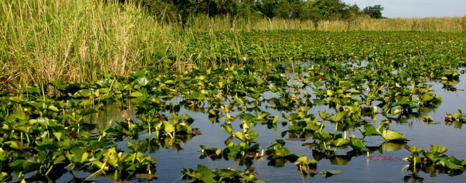 Everglades Airboat Tour - Florida Everglades