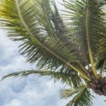 West Palm Beach Attractions - Palm Tree
