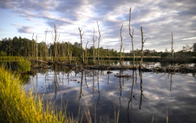West Palm Beach Airboat Rides, climate change, and the Everglades